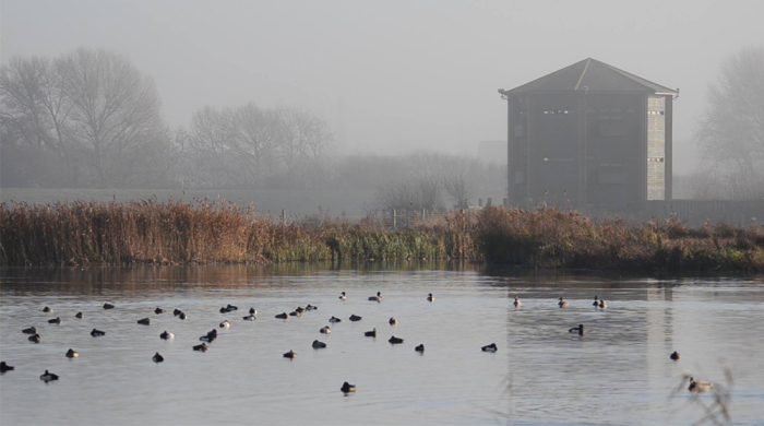 The Diverse Design Of Wetlands Architecture